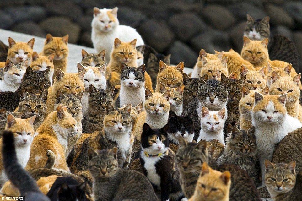 面白い可愛い猫達