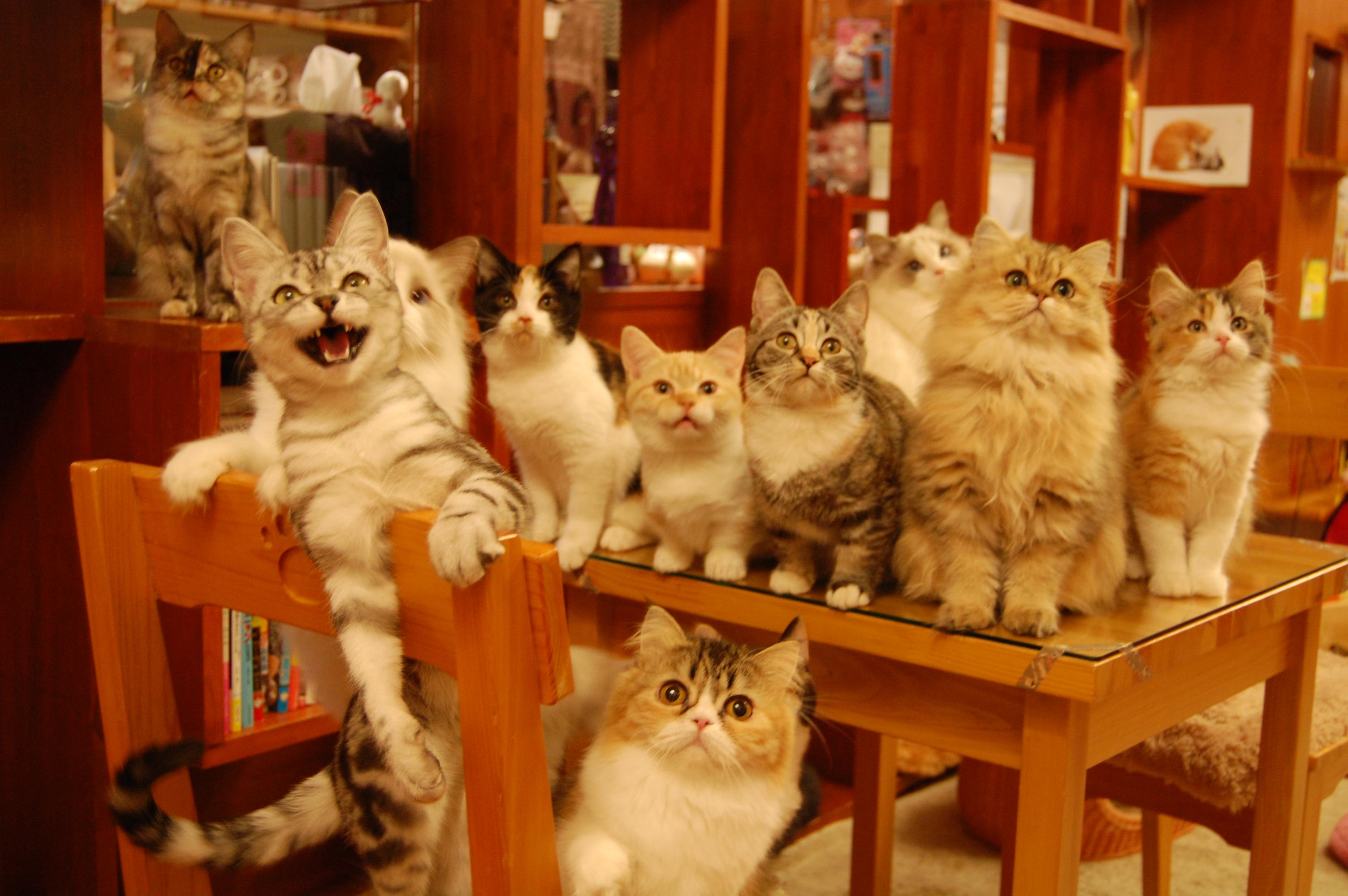 猫カフェどうかにゃ!モフモフだよ!