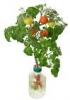 ペットマトとはwwwwwwペットボトルで作るプチトマト。自宅の窓辺で家庭菜園