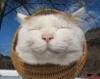 愛媛にある『猫島』の画像が天国すぎてヤバイと話題に