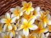 ハワイの花まとめ