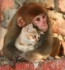 【癒】ネコとサルの仲睦まじい写真集