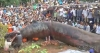 驚愕の真実!ベトナムの地中から想像を絶する巨大生物が発見された!! 画像・動画あり