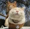 可愛い猫画像まとめ