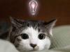 【ネットで大人気!】見ているだけで癒される。猫の天然な姿が可愛過ぎる。