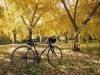 秋に良い☆おすすめ洋楽10選